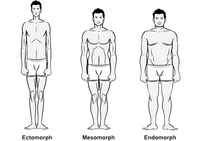 body types ectomorph mesomorph endomorph