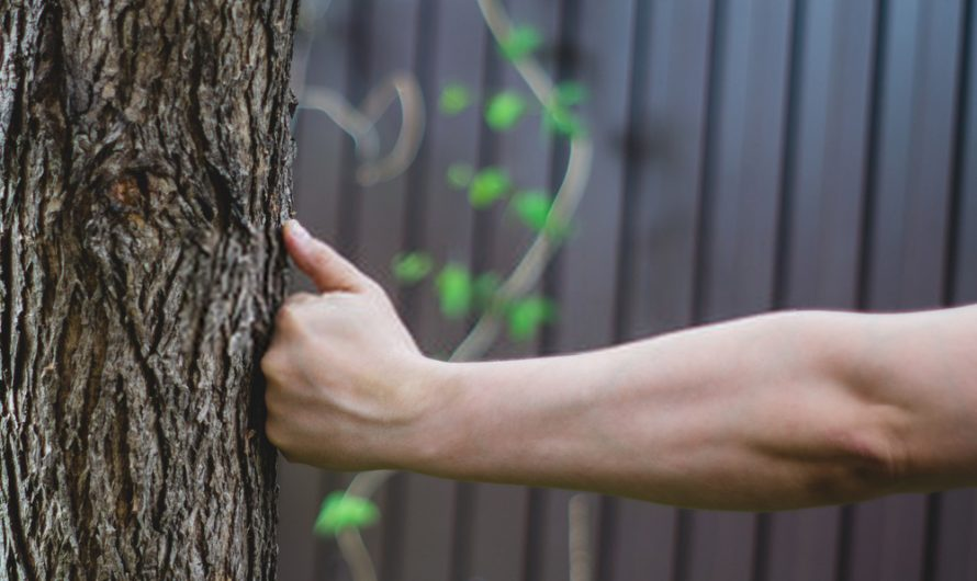 Punching & Kicking Trees: Should you do it?